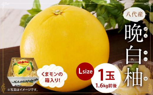 八代産晩白柚1玉 Lサイズ (くまモンの箱入り)