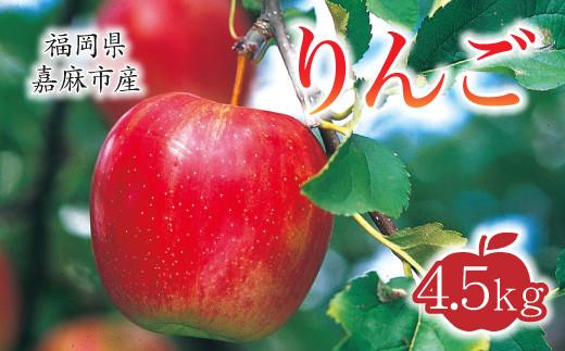 【10月上旬から順次発送】りんご 4.5kg 九州産 陽光 新世界 ふじ