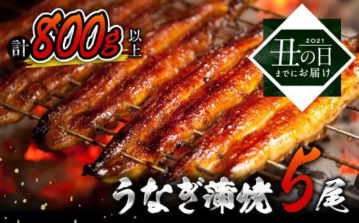BB15-US3 《丑の日までにお届け!!》うなぎ蒲焼5尾(計800g以上)国産鰻(ウナギ・さんしょう・たれセット)