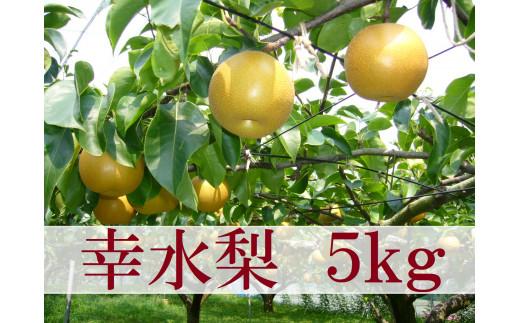 【21-012-035】鳥取県産梨「幸水梨」(5kg)