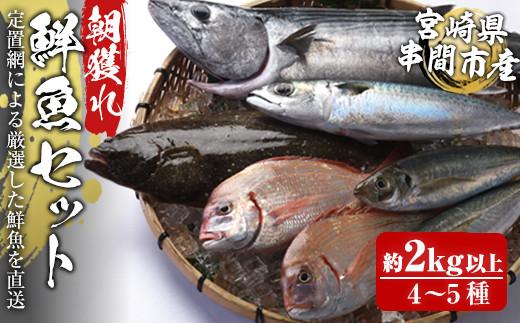 KU070 <先行予約・2021年11月上旬から発送開始>宮崎県串間産 朝獲れ鮮魚セット計約2~3kg(4~5種) 定置網による厳選「朝獲れ鮮魚」を漁師直送! 【豊漁丸】【KU070】