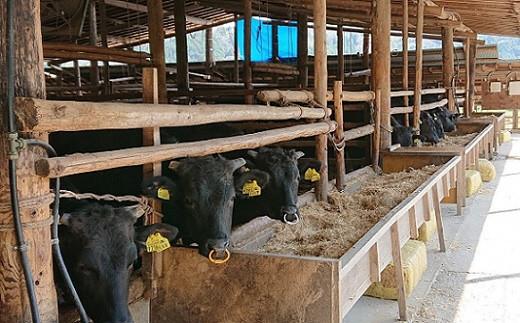 森畜産牛舎