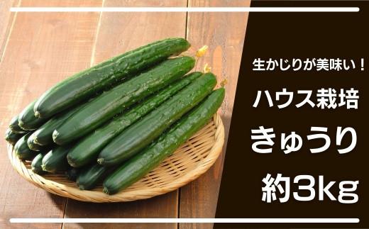 大崎上島産 シャキッと食感!生かじりが美味しいハウス栽培きゅうり約3kg