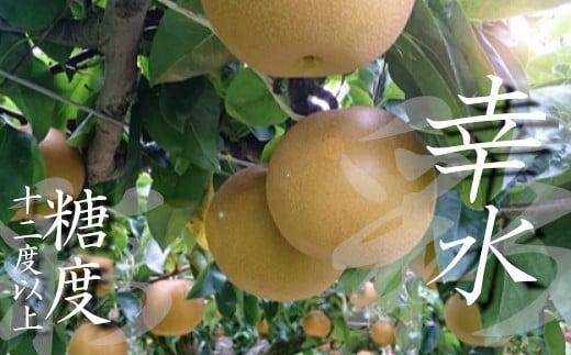【糖度12度以上保証】彩りファームの完熟梨 プレミアム幸水2.5㎏【11246-0149】
