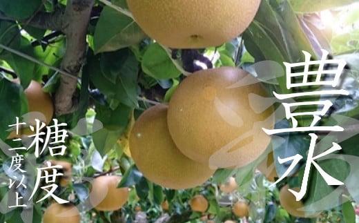 【糖度12度以上保証】彩りファームの完熟梨 プレミアム豊水2.5㎏【11246-0150】