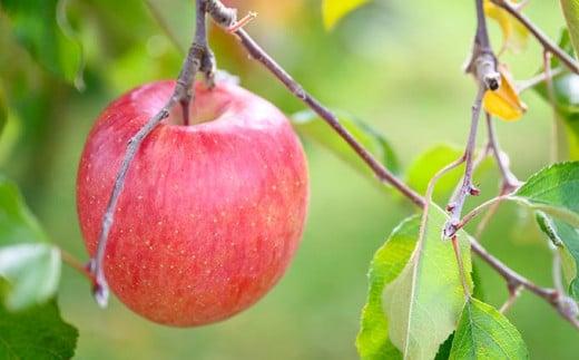 りんごといったら「サンふじ」と言われるりんごの定番品種です。絶妙な甘味と酸味のバランスとシャキシャキとした歯ごたえが人気です。