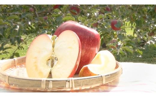 【幻のりんご】あいかの香り約3kg 信州生まれの数少ない希少なりんご [№5675-1070]