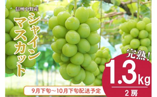 I-174-1 信州中野産シャインマスカット【2房】