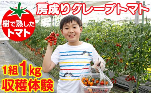 房成りグレープトマト(ミニトマト)1kg収穫体験券