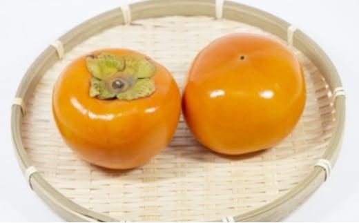 [№5656-1773]富有柿 Lサイズ 14~15玉入