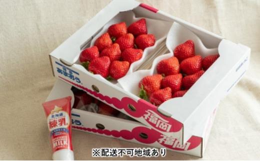 [№5656-1740]福岡産 あまおう 苺 4パック&練乳(コンデンスミルク)1個【配送不可:離島】