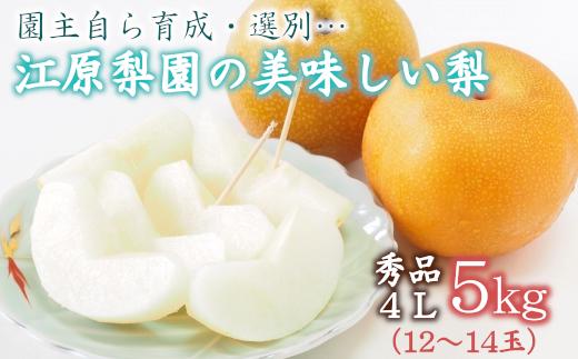 江原梨園の美味しい梨 5kg 【11246-0151】