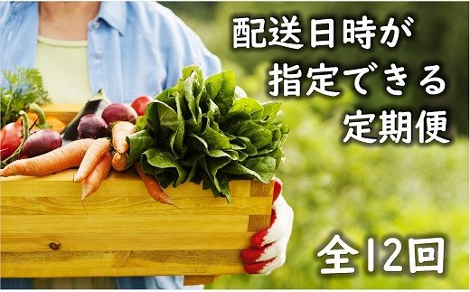 53-23_「お好きな時にいつでもお届け」本日の朝どれお野菜定期便【全12回】