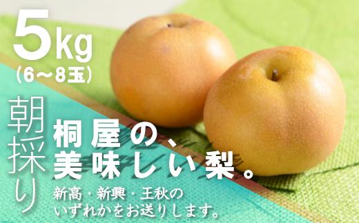 桐屋の美味しい梨(新高・新興・王秋)5㎏ 【11246-0154】