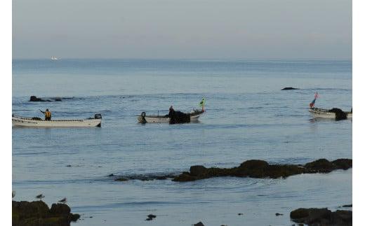 昆布漁の様子