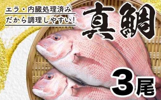 【チャレンジ応援品】真鯛まるごと3尾!