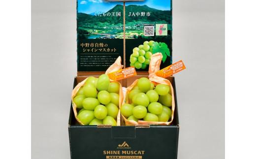 JA中野市ぶどう部会より産地直送!大粒シャインマスカット1kg以上(500g以上×2房)