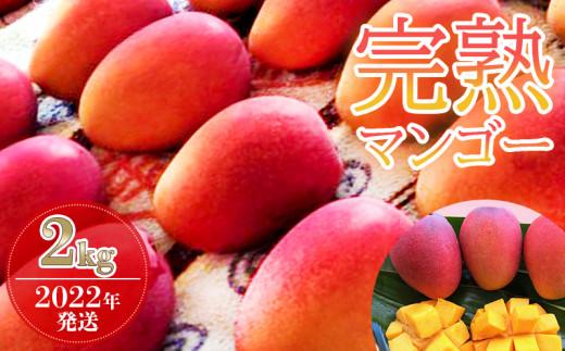 【2022年発送】カネシロマンゴー農園の完熟マンゴー約2kg