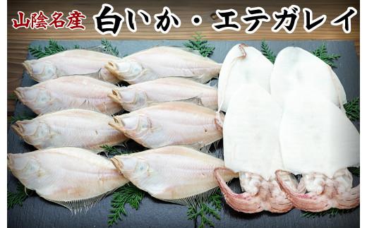 【21-030-008】白いか・エテガレイセット-松