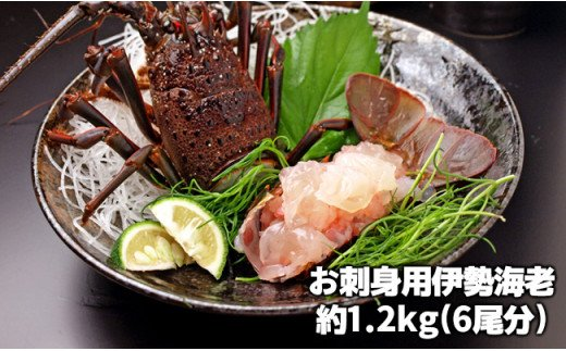 C02-401 伊勢海老お刺身セット 1.2kg【チャレンジ応援品】