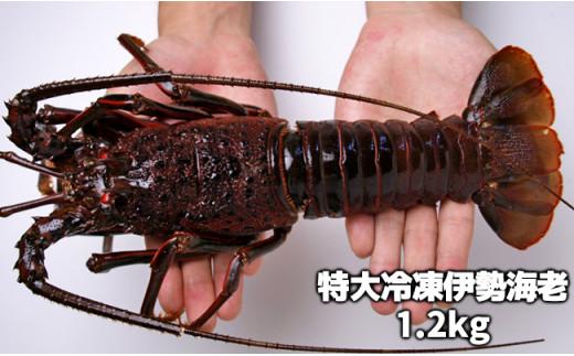 C01-205 活〆冷凍伊勢海老 1.2kg【チャレンジ応援品】
