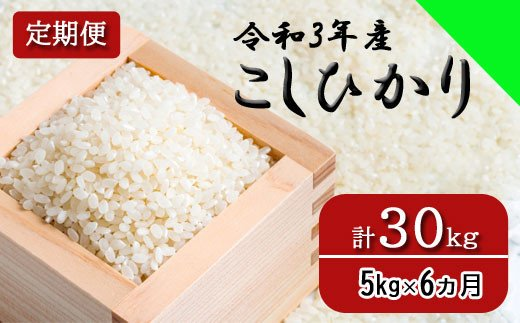 150260【令和3年産/お米定期便/6ヵ月】しまね川本 コシヒカリ 5kg (計30kg)
