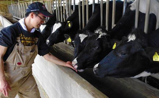 豊かな大地で丹念に育てられた乳牛