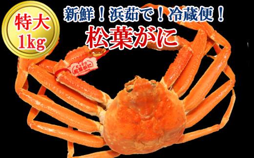 KI94:鳥取産タグ付き松葉ガニ 特大1kg