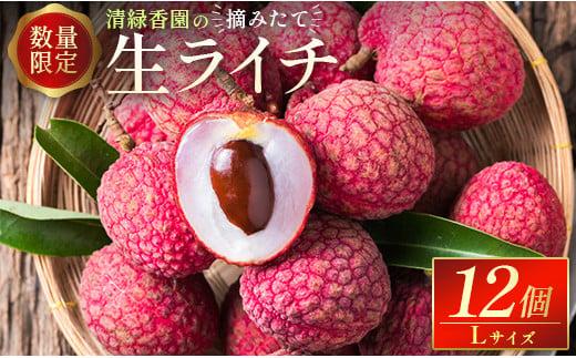 [先行予約][数量限定]清緑香園の摘みたて「生ライチ」12個 宮崎県産【C235】