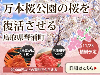 万本桜公園の桜を復活させる