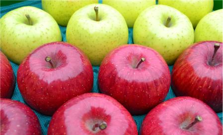 青森県 三戸町 のりんご