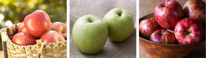 おすすめの定番品種りんご