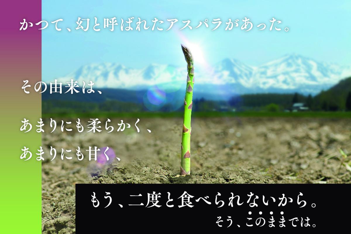 幻のアスパラ「ラスノーブル」苗復活プロジェクト