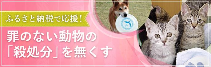 ふるさと納税で罪のない動物たちの殺処分を無くす活動を応援して「人と動物の共生する日本」を実現したい!
