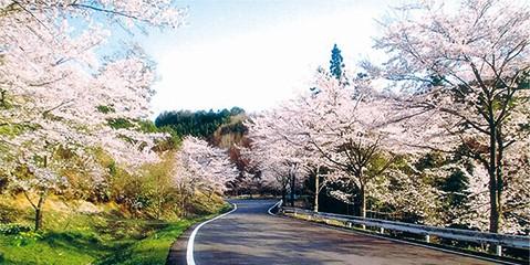 桜のいざなみ街道イメージ