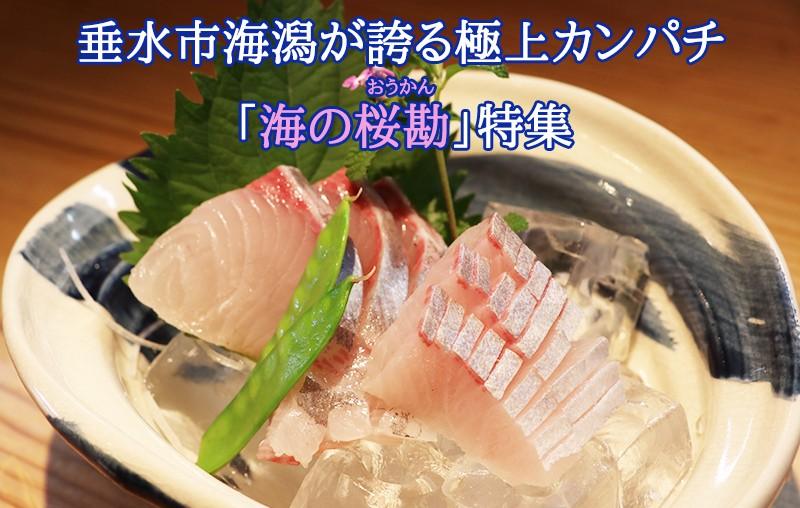 海の桜勘特集