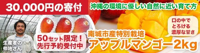 50セット限定!南城市産特別栽培アップルマンゴー2kg