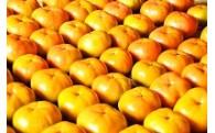 柿の木オーナー