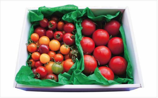 【今が旬!】フルートトマトとカラフルトマトのハーフ&ハーフ★