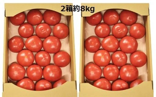 熟した大玉トマト2箱約8kg