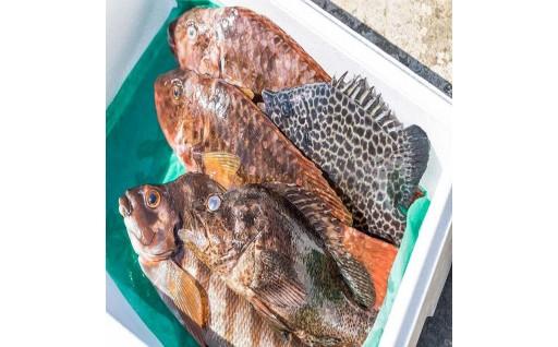 南伊豆若手漁師が送る新鮮鮮魚セット!