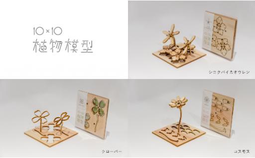 4月24日は牧野富太郎植物博士の誕生日!10×10植物模型