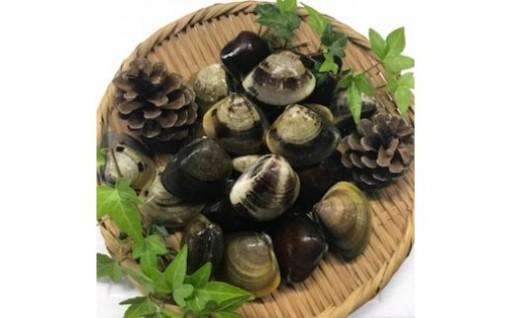 マルヨシ水産 桑名産中粒天然蛤 1kg