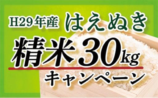 平成29年産【精米】山形県最上町産はえぬき30kg