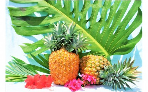 【先行受付】マキシ農園パイナップル