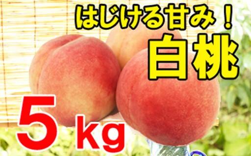 今、一番人気!白桃(ご自宅用)5kg!