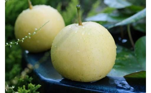兵庫県香住産 二十世紀梨