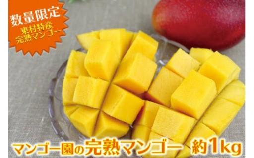 東村特産マンゴー園の完熟マンゴー約1kg(2~3玉)