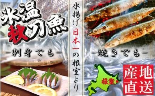 <予約品>【北海道根室産】氷温さんま4kg