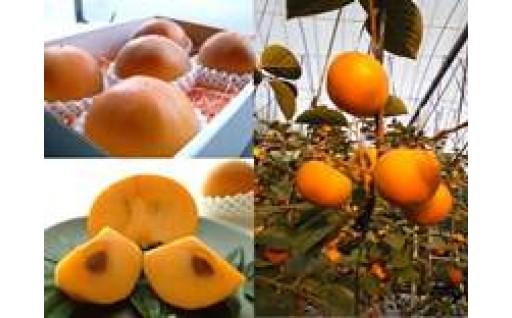 温室新秋柿